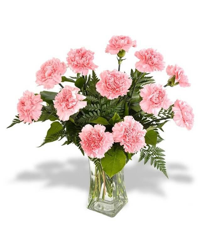 Vừa dễ cắm lại vừa đẹp, hoa cẩm chướng chính là loại hoa không thể thiếu trong ngày Tết - Ảnh 34.