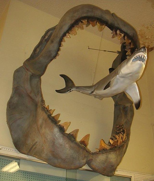 Loài động vật nào đáng sợ nhất trong lịch sử Trái đất? - Ảnh 4.