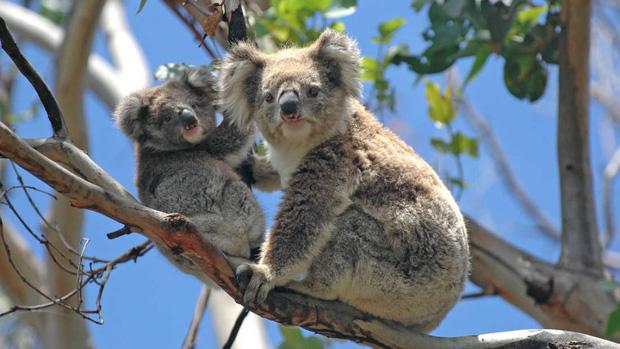 Choáng váng: WWF dự đoán hơn MỘT TỈ sinh vật có thể đã chết vì vụ cháy rừng đại thảm họa của Úc, và đó chưa phải con số cuối cùng - Ảnh 1.