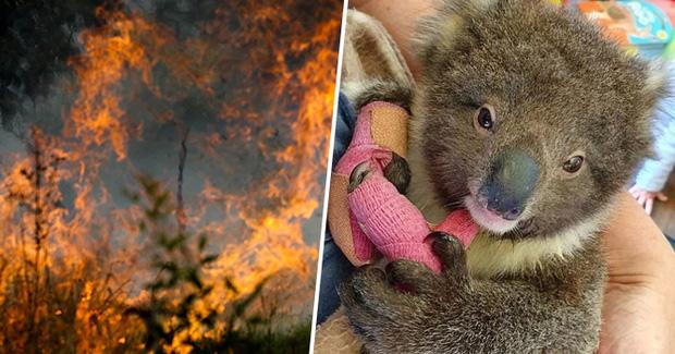 Choáng váng: WWF dự đoán hơn MỘT TỈ sinh vật có thể đã chết vì vụ cháy rừng đại thảm họa của Úc, và đó chưa phải con số cuối cùng - Ảnh 2.