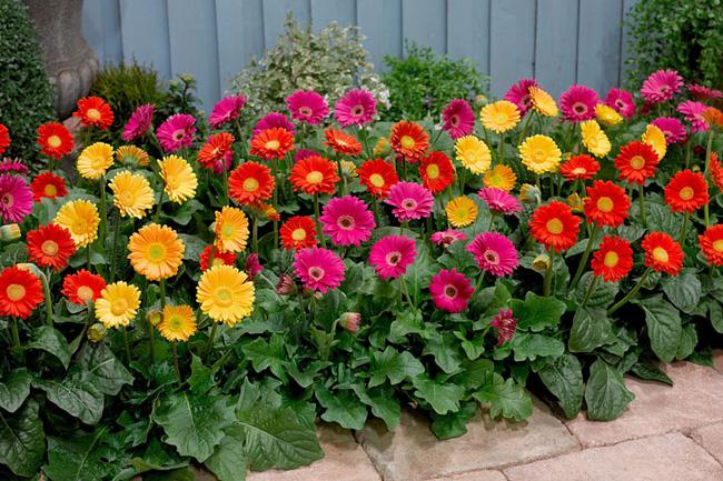 Những loại hoa nên chưng trên bàn thờ dịp Tết cho năm mới thịnh vượng, an khang - Ảnh 5.