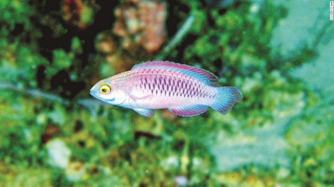 Viện hàn lâm khoa học California tìm thấy 71 loài thực vật và động vật mới - Ảnh 6.