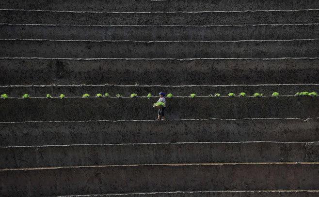 24h qua ảnh: Nông dân Việt Nam cấy lúa trên ruộng bậc thang - Ảnh 2.