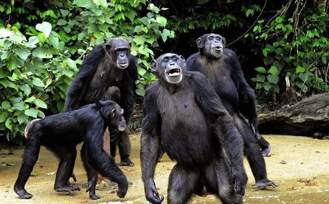 Con người đã từng đứng trước bờ vực của sự tuyệt chủng? - Ảnh 2.