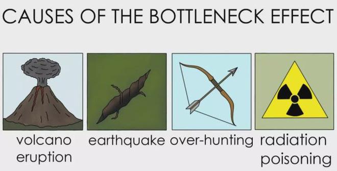 Con người đã từng đứng trước bờ vực của sự tuyệt chủng? - Ảnh 4.