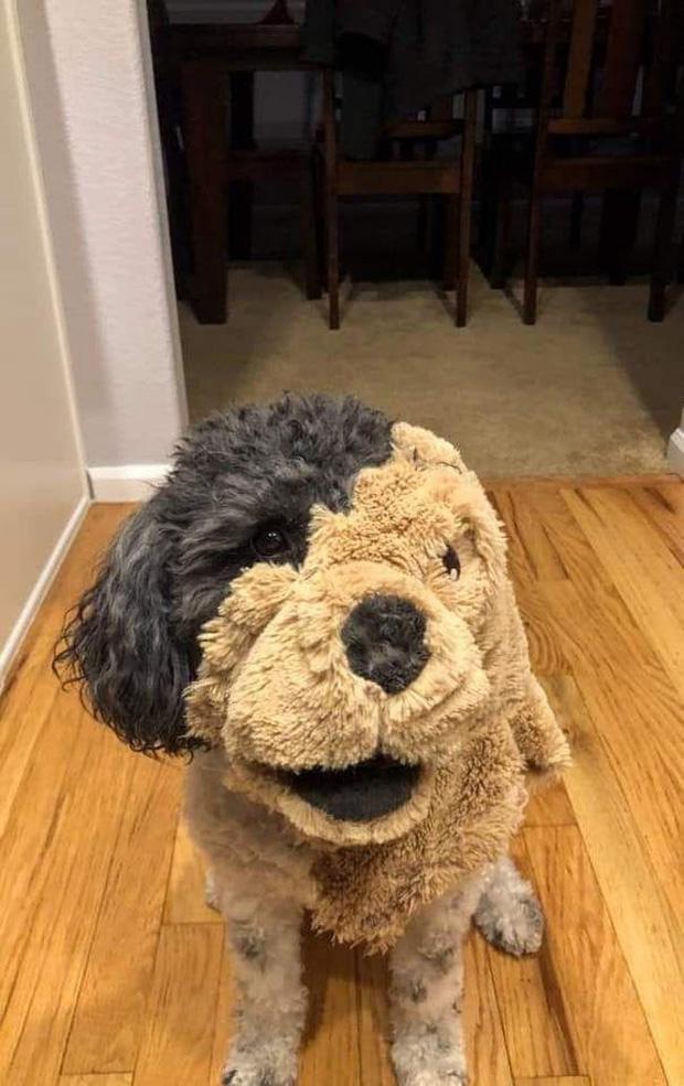 Chó bông hay chó thật đây nhỉ?