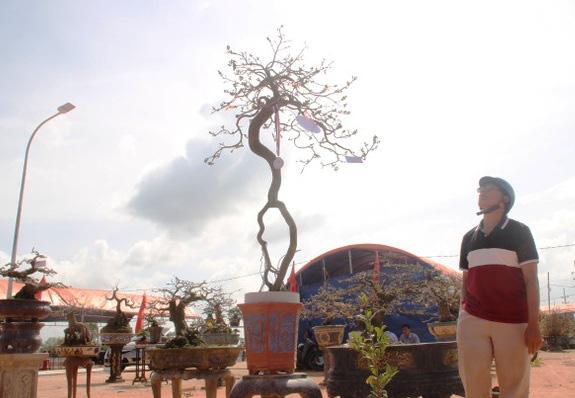 Ngắm khủng long bạo chúa, vũ nữ chân dài ở hội thi đại lão mai - Ảnh 5.