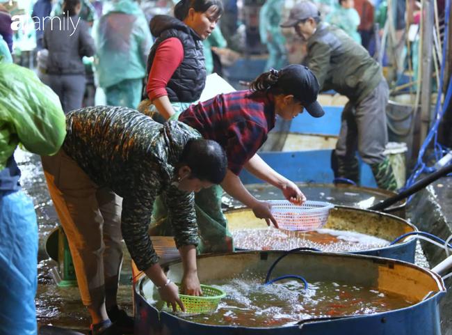 Ngày ông Công ông Táo, chợ cá lớn nhất Hà Nội cháy hàng cá chép từ rạng sáng - Ảnh 2.