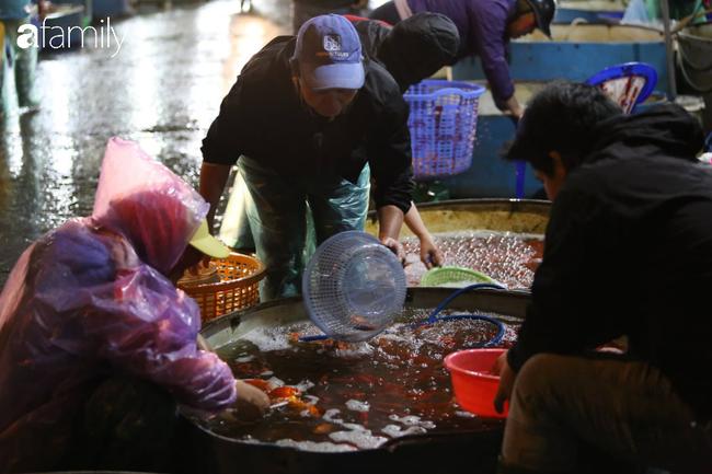 Ngày ông Công ông Táo, chợ cá lớn nhất Hà Nội cháy hàng cá chép từ rạng sáng - Ảnh 13.