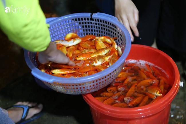 Ngày ông Công ông Táo, chợ cá lớn nhất Hà Nội cháy hàng cá chép từ rạng sáng - Ảnh 15.