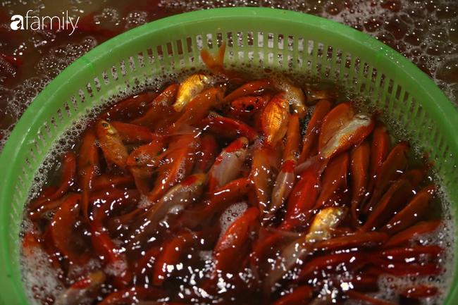 Ngày ông Công ông Táo, chợ cá lớn nhất Hà Nội cháy hàng cá chép từ rạng sáng - Ảnh 16.
