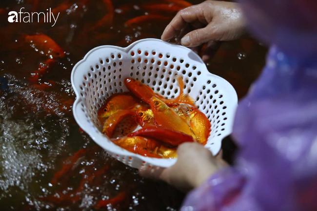 Ngày ông Công ông Táo, chợ cá lớn nhất Hà Nội cháy hàng cá chép từ rạng sáng - Ảnh 7.