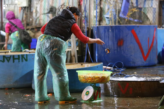 Ngày ông Công ông Táo, chợ cá lớn nhất Hà Nội cháy hàng cá chép từ rạng sáng - Ảnh 10.