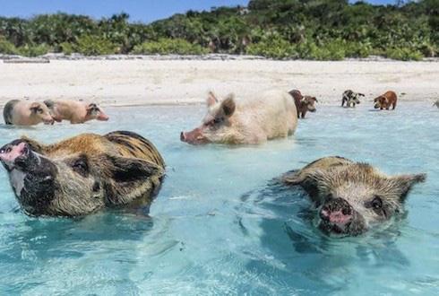 Những hòn đảo kỳ quái cai trị bởi động vật bí ẩn - Ảnh 3.