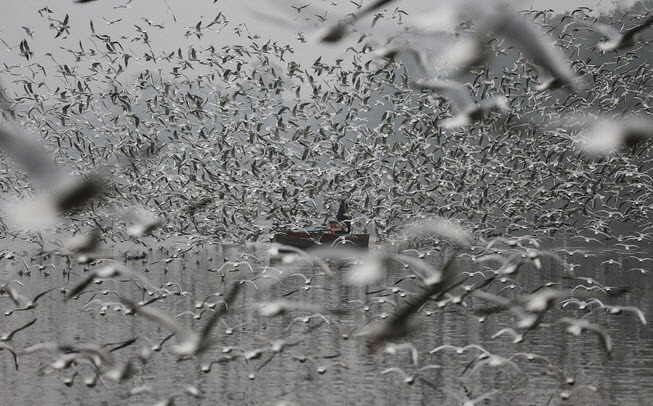 24h qua ảnh: Ngư dân Trung Quốc thu hoạch cá vào mùa đông - Ảnh 11.