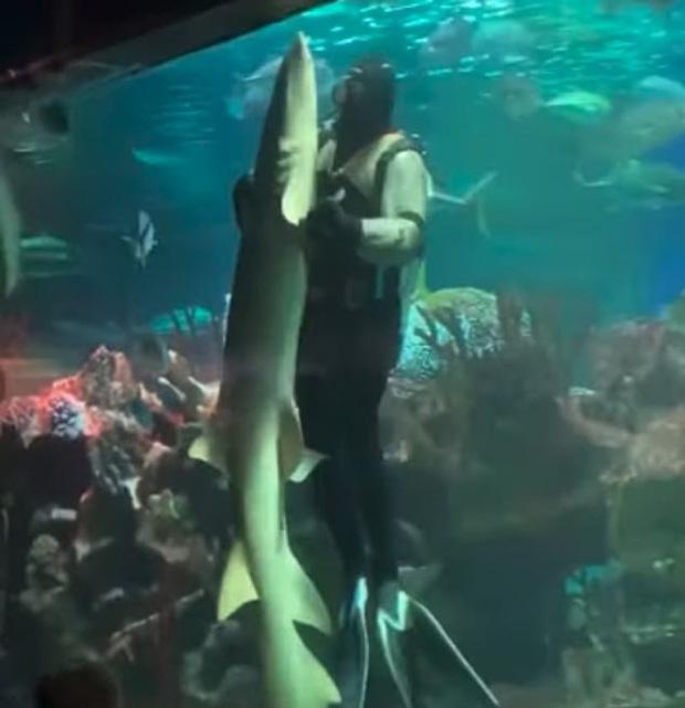 Cảnh cá mập khiêu vũ với thợ lặn trong thủy cung khiến nhiều người thích thú nhưng dân mạng lại phẫn nộ, chỉ trích - Ảnh 2.