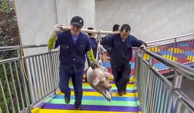 Đem trói lợn sống vào dây nhảy bungee để mua vui, công viên giải trí nhận cả tấn gạch đá từ cộng đồng mạng - Ảnh 2.