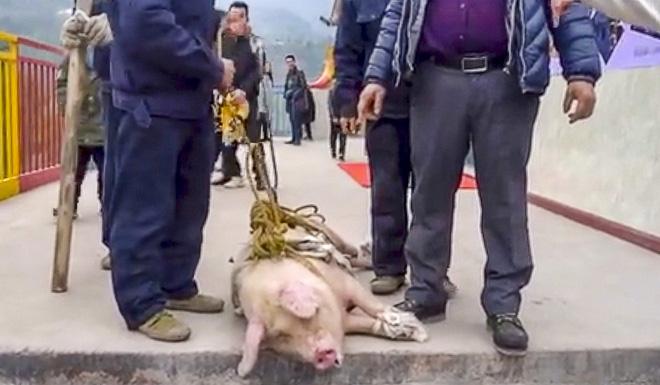 Đem trói lợn sống vào dây nhảy bungee để mua vui, công viên giải trí nhận cả tấn gạch đá từ cộng đồng mạng - Ảnh 3.