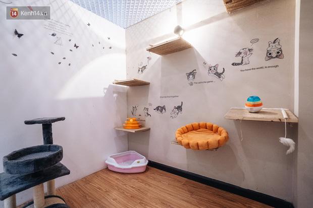 Sướng như boss dịp Tết: Sen đưa đi làm đẹp xong gửi vào khách sạn chó mèo siêu 'sang chảnh' giá tiền triệu - ảnh 6