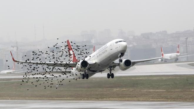 Điều gì sẽ xảy ra khi những chú chim lao vào bên trong động cơ máy bay? - Ảnh 1.