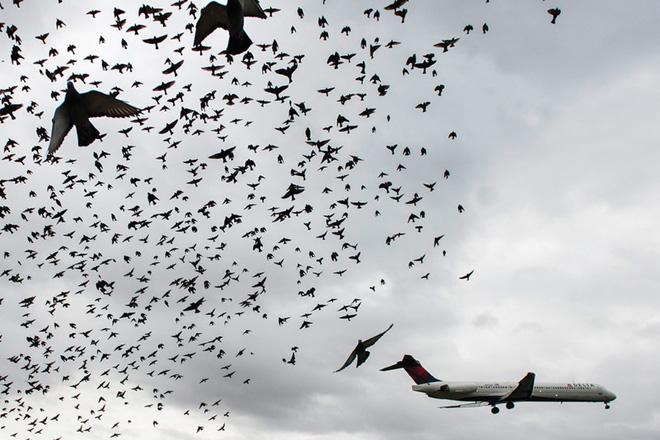 Điều gì sẽ xảy ra khi những chú chim lao vào bên trong động cơ máy bay? - Ảnh 3.