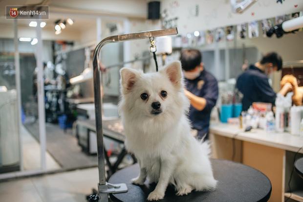 Sướng như boss dịp Tết: Sen đưa đi làm đẹp xong gửi vào khách sạn chó mèo siêu 'sang chảnh' giá tiền triệu - ảnh 14