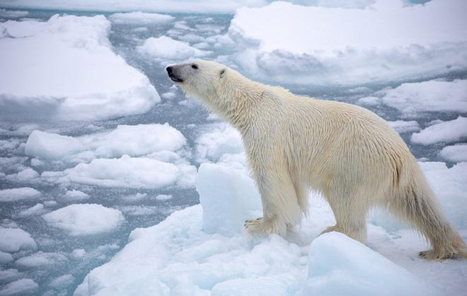Sốc: Nồng độ CO2 trong khí quyển đã chạm tới ngưỡng cao nhất trong lịch sử loài người - Ảnh 3.