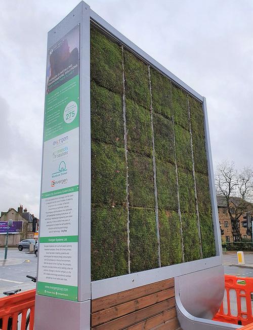 Rừng nhỏ bằng rêu lọc không khí tại Anh - Ảnh 1.