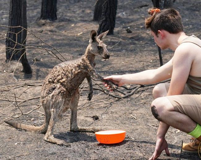 Khoảnh khắc chú chuột túi nhỏ mình đầy vết thương, ánh mắt cầu xin con người hãy giúp đỡ sau thảm họa cháy rừng ở Úc gây chấn động - Ảnh 1.