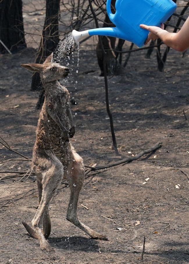 Khoảnh khắc chú chuột túi nhỏ mình đầy vết thương, ánh mắt cầu xin con người hãy giúp đỡ sau thảm họa cháy rừng ở Úc gây chấn động - Ảnh 2.
