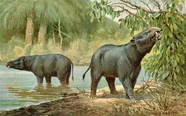Vì sao mũi của loài voi lại tiến hóa để dài như vậy? - Ảnh 1.