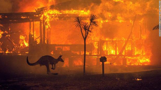 Gần NỬA TỈ sinh vật bị thiêu rụi, 1/3 số gấu Koala chết cháy: Úc đang trải qua trận cháy rừng 'đại thảm họa' thực sự mà chưa nhìn thấy lối thoát - ảnh 1