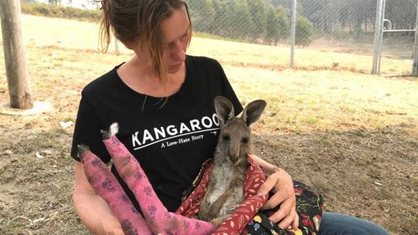 Ảnh: Đau đớn 'cái chết câm lặng' của hàng trăm triệu động vật trong cháy rừng Australia - Ảnh 1.