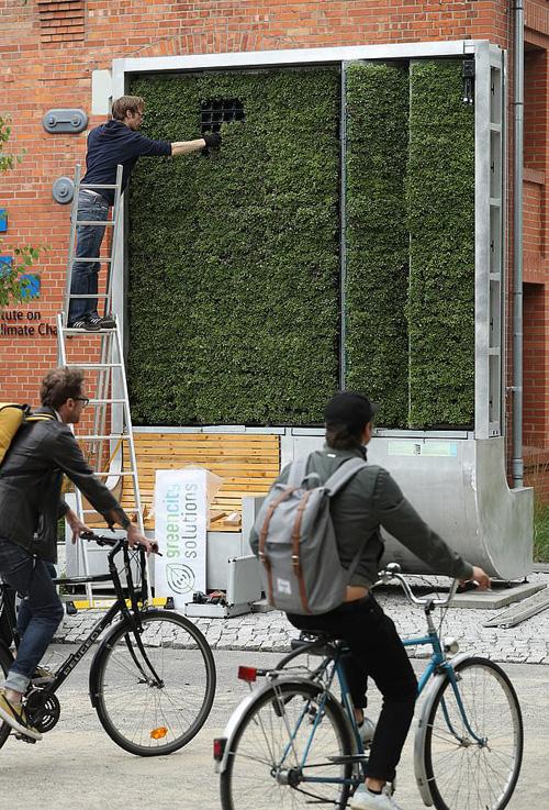 Rừng nhỏ bằng rêu lọc không khí tại Anh - Ảnh 3.