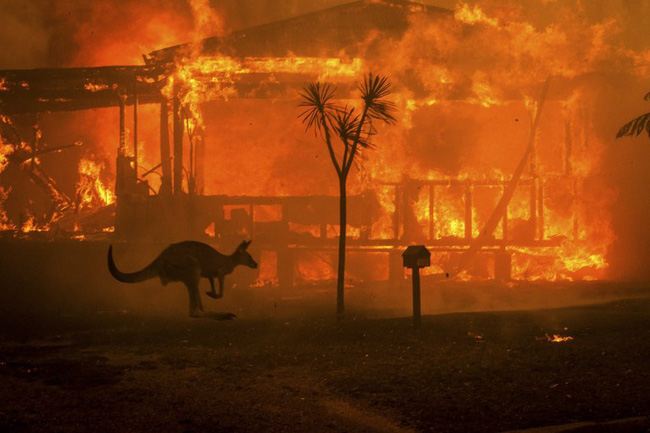 Khoảnh khắc chú chuột túi nhỏ mình đầy vết thương, ánh mắt cầu xin con người hãy giúp đỡ sau thảm họa cháy rừng ở Úc gây chấn động - Ảnh 3.