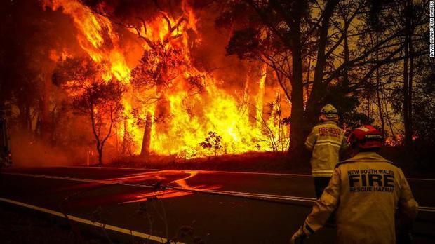 Gần NỬA TỈ sinh vật bị thiêu rụi, 1/3 số gấu Koala chết cháy: Úc đang trải qua trận cháy rừng 'đại thảm họa' thực sự mà chưa nhìn thấy lối thoát - ảnh 3