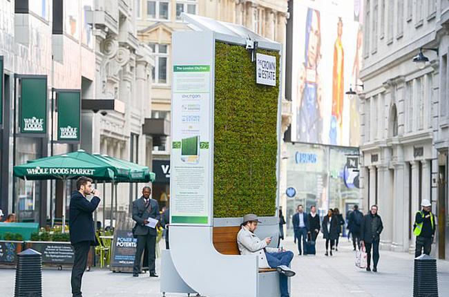 Rừng nhỏ bằng rêu lọc không khí tại Anh - Ảnh 4.