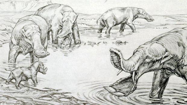 Vì sao mũi của loài voi lại tiến hóa để dài như vậy? - Ảnh 4.