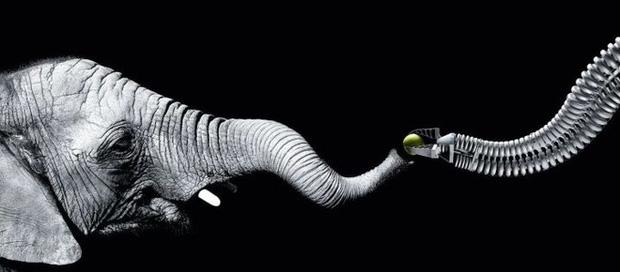 Vì sao mũi của loài voi lại tiến hóa để dài như vậy? - Ảnh 8.