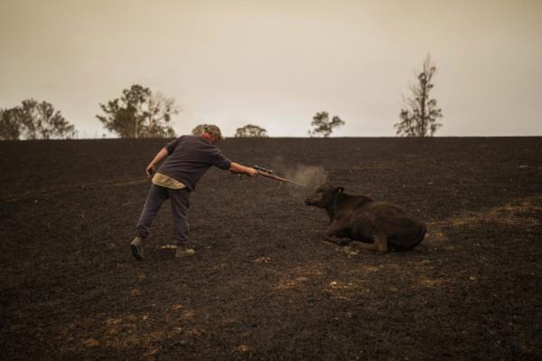 Ảnh: Đau đớn 'cái chết câm lặng' của hàng trăm triệu động vật trong cháy rừng Australia - Ảnh 9.