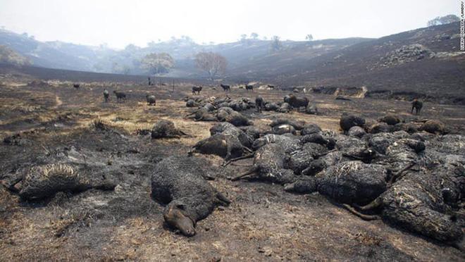 Đại thảm họa cháy rừng Úc nhìn từ không gian: Cả nước như quả cầu lửa, những mảng xanh trù phú bị thay bằng màu khói trắng tang thương - Ảnh 25.