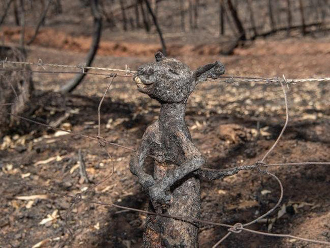 Đại thảm họa cháy rừng Úc nhìn từ không gian: Cả nước như quả cầu lửa, những mảng xanh trù phú bị thay bằng màu khói trắng tang thương - Ảnh 26.