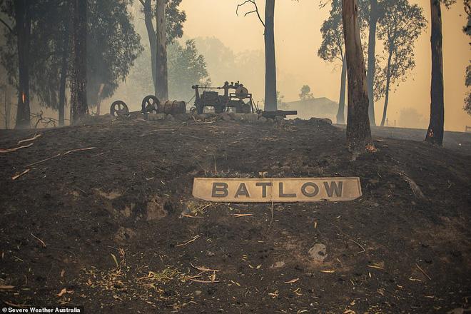 Xác kangaroo, gấu koala và cừu cháy đen, nằm la liệt bên đường ở Úc cho thấy thảm hoạ cháy rừng đang kinh khủng đến mức nào - Ảnh 6.
