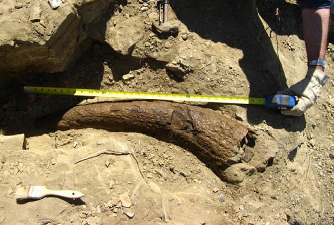 Sừng khủng long 33.500 năm tuổi khiến các nhà khoa học đặt câu hỏi: Phải chăng con người đã sống cùng thời với khủng long? - Ảnh 2.