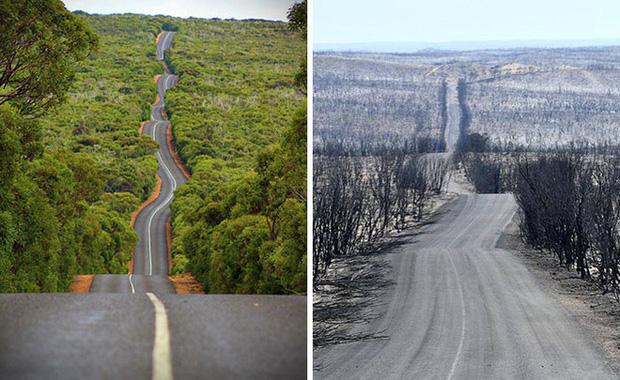 Chùm ảnh đau lòng: Nước Úc trước và sau khi ngọn lửa hung tàn quét qua - Ảnh 1.