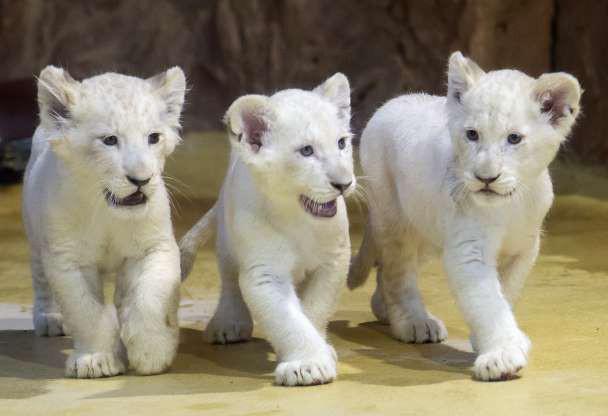 """Hình ảnh đáng yêu của những """"đứa trẻ"""" trong sở thú - Ảnh 12."""