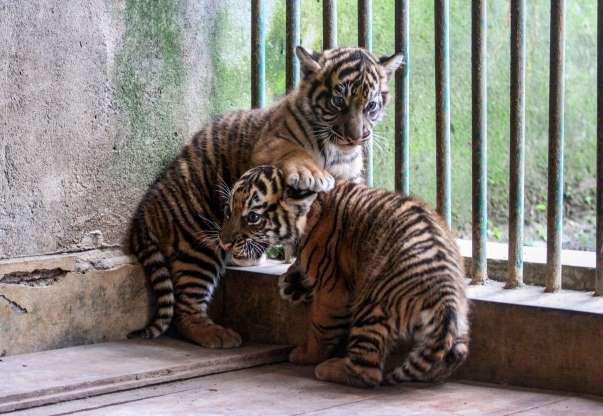 """Hình ảnh đáng yêu của những """"đứa trẻ"""" trong sở thú - Ảnh 15."""