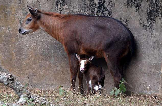 """Hình ảnh đáng yêu của những """"đứa trẻ"""" trong sở thú - Ảnh 3."""