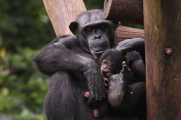 """Hình ảnh đáng yêu của những """"đứa trẻ"""" trong sở thú - Ảnh 5."""