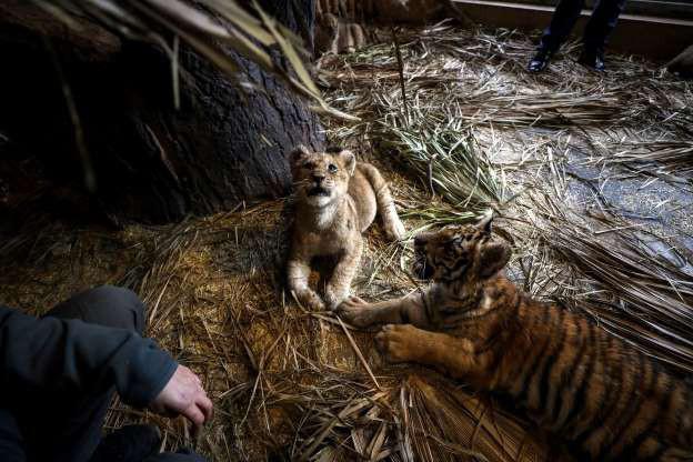 """Hình ảnh đáng yêu của những """"đứa trẻ"""" trong sở thú - Ảnh 7."""